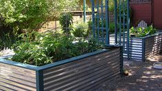 I love the look of this corrugated sheet metal raised bed: would be excellent in an urban front yard setting where modern good looks are important to keep the neighbors happy. Backyard and Garden,garden,garden things,Gar Metal Raised Garden Beds, Raised Planter, Raised Beds, Raised Gardens, Metal Fence, Corrugated Metal, Rusty Metal, Unique Gardens, Amazing Gardens