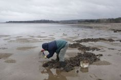 Clam Digging in Digby Yarmouth Nova Scotia, Annapolis Valley, Atlantic Canada, Family Roots, Prince Edward Island, New Brunswick, Adventure Tours, Clam, Newfoundland