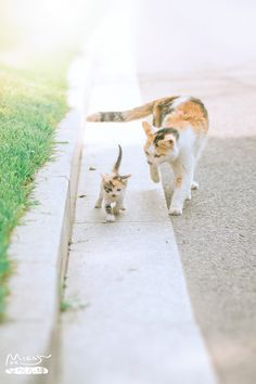 mom cat and kitten