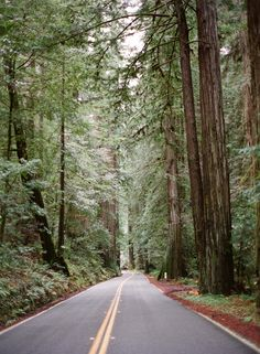 Driving the Humboldt Redwoods State Park in Mendocino California | photography by http://www.marinakoslowphotography.com/