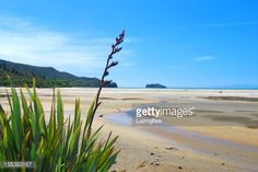 "LazingBee Photos NZ on Twitter: ""Capturing the Essence of New Zealand  #Getty #iStock #NewZealand #Aotearoa #gettyimages """