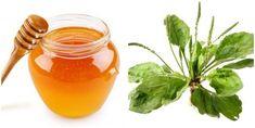 Reteta sirop de patlagina cu miere. Cel mai bun remediu contra bolilor infectioase si respiratorii Honey, Mai, Health, Food, Syrup, Canning, Plant, Health Care, Essen