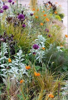 Een wat meer uitgesproken kleurkeuze in de tuin?