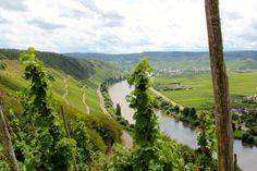 Weißwein Klassiker Weinseminar