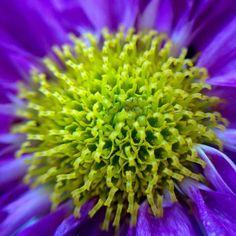 #fotofanatics_flowers_ #flower_members #eye_for_earth #bestshotz_macro #bestshotz_garden #igglobalclubmacro #na_natures_art #nature_sultans #natureloversgallery #macro_freaks #moodynature #macroworld_tr #macro_captures #eyecatching_pics #joyful_pics #9vaga_macro9 #pocket_macro #show_us_macro #bpa_macro #lenstogether #loves_flowers_ #ig_discover_petal #igbest_macros #ir_macro #9Vaga_NatureMiracles9 #igscflowers #amateurs_shot #flowersandmacro by nguyetque576