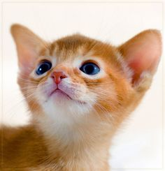 """an inquisitive little kitten is the best reminder if what youth is all about."" --Jo Kittinger"