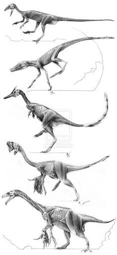 主竜類の筋肉に関する研究