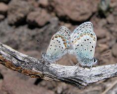 Hybrid butterfly photo