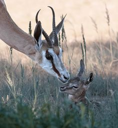 First Kiss by Andre Pretorius on 500px