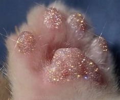 Eva cats pets cute – Best of Wallpapers for Andriod and ios Boujee Aesthetic, Peach Aesthetic, Aesthetic Collage, Aesthetic Pictures, Estilo Gossip Girl, Glitter Photography, Images Esthétiques, Cute Baby Cats, Glitter Art