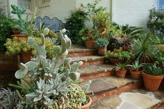 Cactus & Succulent containers (low water usage) | Flickr - Photo Sharing!