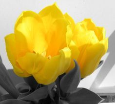 Yellow, black & white