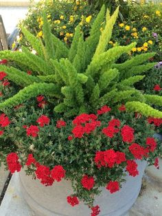 Container Gardening Inspirations Worthy of Pinning Foxtail fern the green is so striking against the red verbena. The post Container Gardening Inspirations Worthy of Pinning appeared first on Ideas Flowers. Container Flowers, Container Plants, Container Gardening, Succulent Containers, Asparagus Fern, Landscaping With Rocks, Front Yard Landscaping, Landscaping Ideas, Acreage Landscaping