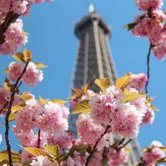 """【valeriasouzavsp】さんのInstagramをピンしています。 《""""vous retournerez à Paris? Paris est loin, Paris est beau, je ne l'ai pas oublié"""" albert camus para fechar a semana dedicada à beleza da flor de #cerejeira. bom final de semana, pípol! albert camus pour le fin de la semaine dedié à la beauté des #cerisiersenfleurs. bon week-end à toutes et tous! #parismaville #cherryblossomseason #sakura #thatsdarling #instablooms》"""