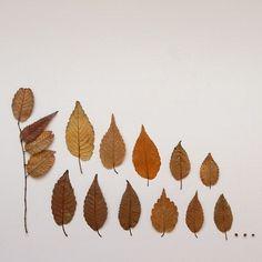 yokoo:  Foliage 002