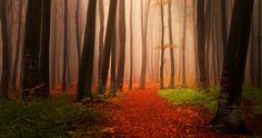 forest landscape 4k ultra hd wallpaper