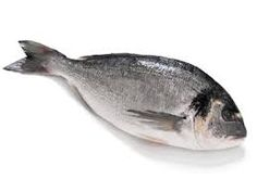 Dorada  gilt head bream