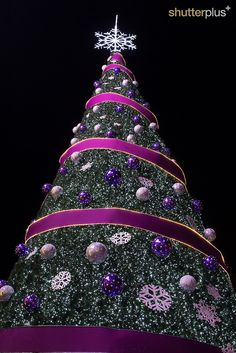 Christmas tree, Singapore - decorated in all pink and purple!!