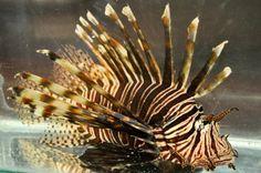 Help marine biologists eliminate an invasive species with an underwater robot