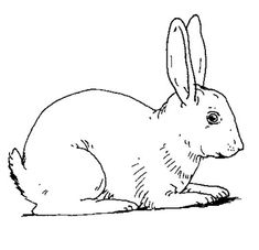 Rabbit - Free Printable Coloring and Activity Pages. Click for more fun pages for kids.