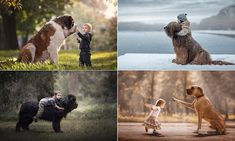 Incredible photo series shows huge dogs gently playing with their tiny toddler pals Daily Mail Online Huge Dogs, Giant Dogs, Brindle Great Dane, Great Dane Names, Harlequin Great Danes, Black Russian Terrier, Photos With Dog, Dogs And Kids, Animal Photography