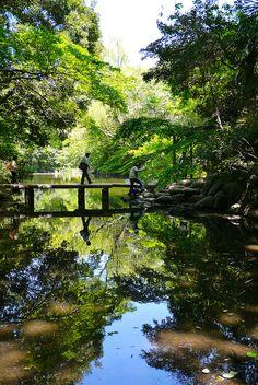 Garden at Tokyo University, Japan