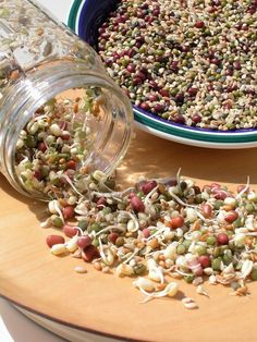 Sprouts: A Terrific Food For Companion Birds