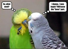 funny love images | Funny Bird Love Image for Fb Share | Graphics99.com