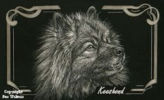 Keeshond with border - Copyright Sue Walters