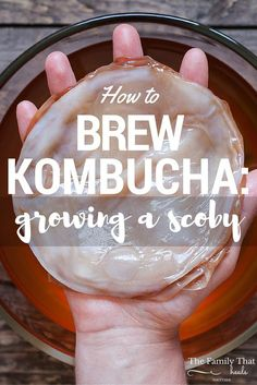 How to Brew Tasty Kombucha: Growing a Scoby Kombucha Scoby, How To Brew Kombucha, Kombucha Recipe, Kombucha Benefits, Making Kombucha, Kombucha Flavors, Whole Food Recipes, Healthy Recipes, Drink Recipes