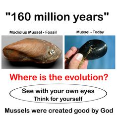 Where's the evolution? Creationism Vs Evolution, Atheist Jokes, Noah Flood, Faith Is The Substance, Now Faith Is, In The Beginning God, Awakening Quotes, Set You Free, Texts