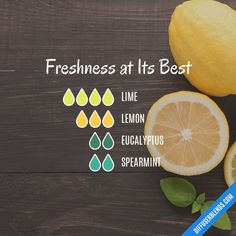 Freshness at Its Best - Essential Oil Diffuser Blend