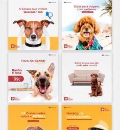 Pet Shop, Pitbull, Instagram Design, Instagram Posts, Dog Template, Social Themes, Web Design, Dog Branding, Medium Dogs