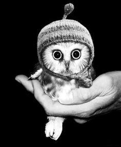 cute little owl ♥