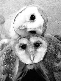 ~♛~ Owls