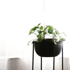 """Sandra on Instagram: """"▫️une plante▫️juste pour profitez encore de la douceur et du soleil. Juste s'arrêter un instant et regarder ce qui nous entoure et…"""" Planter Pots, Instagram, Gentleness, Plants, Sun"""