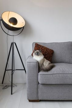 Our customer Joel's Black and Silver Chicago Lamp is doing a great job of keeping his purring pal in the limelight. MADE.COM/Unboxed