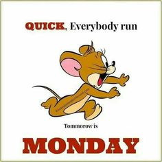 Tuesday Humor, Monday Humor, Monday Quotes, Its Friday Quotes, Have A Happy Day, Happy Weekend, Happy Friday, Cute Good Morning Quotes, Good Morning Good Night