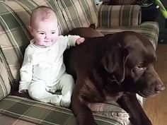 This big boy will be his guardian for life - GIF on Imgur