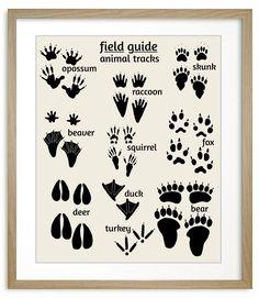 Woodland Animal Tracks Poster | Nursery Wall Art | Alley Kids