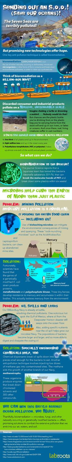 Bioremediation: the tool to combat our pollutants Trending