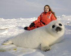Rebecca Aldworth pictured in this #HSI photo w/ a whitecoat harp seal
