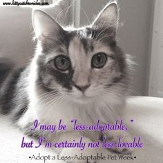 Adopt a Less-Adoptable Pet Week 2016 | #WobblyWednesday - Kitty Cat Chronicles