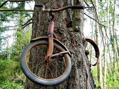 A boy left his bike chained to a tree when he went away to war in 1914. He never returned, leaving the tree no choice but to grow around the bike. Vashon Island, Washington. You can hike to go see it.
