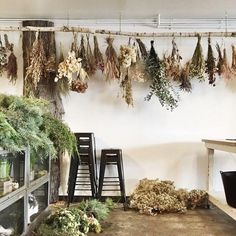 ideas-con-flores-secas-ramos-secando Once we approached the Flores & Prats organization, we wanted to target on the Witch Aesthetic, Aesthetic Green, Arte Floral, Drying Herbs, Dried Flowers, How To Dry Flowers, Apothecary, Planting Flowers, Flowers Garden
