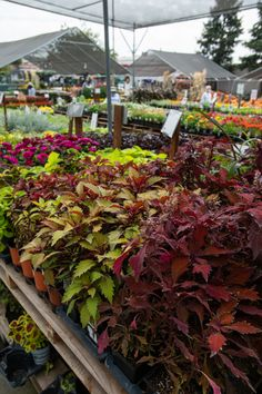 Nursery Supplies, Fall Planting, Citrus Heights, Elk Grove, Irrigation, Flower Beds, Shrubs, Perennials, Outdoor Living