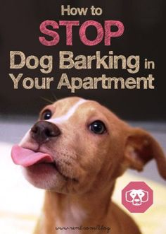 Stop dog barking in your apartment by helping your pup learn what's right and wrong. Learn how on The Shared Wall blog from Rent.com!