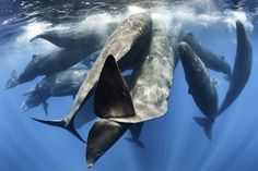 The sperm whales engaged in social activities like physical contact and biosonar communication.