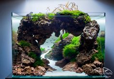 Plastic Manmade Water Plant Grass Green Height for Aquarium Decoration SuppliesDecorations & Substrate Aquarium Nano, Aquarium Set, Aquarium Terrarium, Aquarium Design, Aquarium Fish Tank, Planted Aquarium, Live Aquarium Plants, Nature Aquarium, Pisces