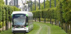 Vom avea GAZON intre sinele de tramvai, ca-n Barcelona ori Strasbourg, la Timisoara? | Opinia Timisoarei – Stiri din Timisoara cu foto si video, evenimente, locuri de munca, meteo, curs valutar, cancan, horoscop, imobiliare, Facebook, Twitter, Youtube si Poli